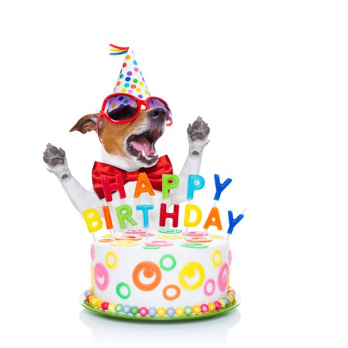 Dog Birthday Cake Recipe Peanut Butter